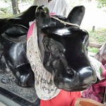 天神さんの牛